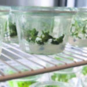 Angewandte Pflanzenbiologie - Gartenbau, Pflanzentechnologie